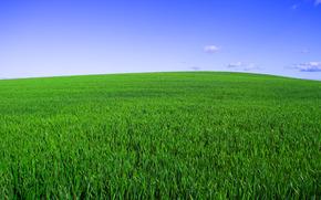 трава, поле, зелёный, небо, горизонт