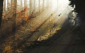 лес, осень, солнечные лучи, красота, дымка, утро, вечер, деревья, дорога