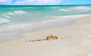 песок, море, краб, прибой