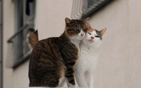 猫, 夫妇, 街道, 爱