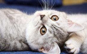 котенок, кошка, кот