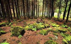 португалия, лес