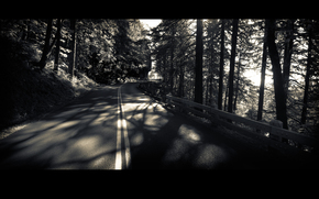 дорога, лес, деревья, чёрно-белый