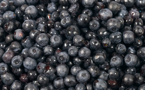 blueberries, sweet, black