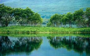 alberi, stagno, riflessione