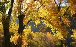 nature, autumn, leaves
