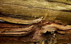 материал, древесина, сук, волокна
