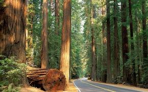 道路, 森林, 树, 性质, 壁纸