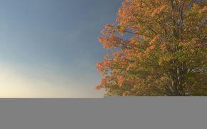 дерево, поле, туман