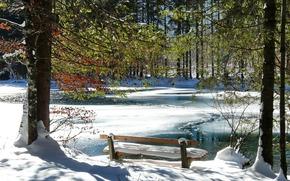 长椅, 冬季, 冷, 河, 雪, 树, 浪漫