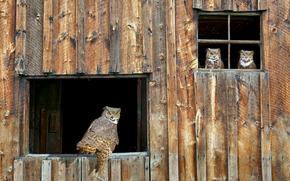 owl, barn, window