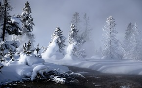 winter, snow, Trees, drifts