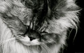 Katze, Katze, schlft