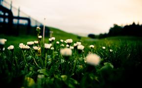 prato, erba, Bianco
