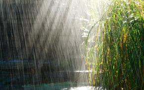 дождь, трава, лужи, солнце