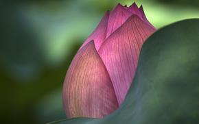 lotus, Macro, light