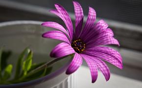 пурпурный, цветок, макро
