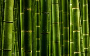 宏, 照片, 性质, 竹, 树干, 壁纸