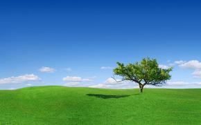 prairie, herbe, solitaire, arbre