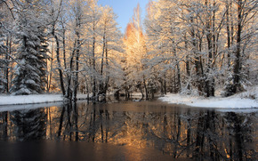 river, peel, ice, forest, snow, winter