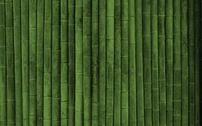 бамбук, текстуры, обои