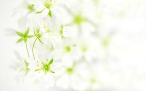 fiori, foto, carta da parati