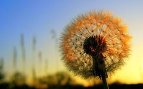цветы, солнце, закат