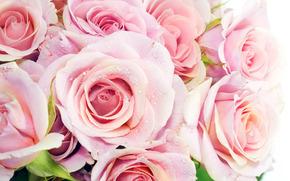 mazzo di fiori, colori, Macro, Roses
