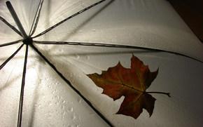 зонтик, дождь, лист, погода, обои, разное