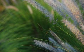 природа, трава, поле, марко, зелень, растение