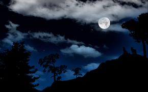 luna, Lupi, paesaggio, carta da parati, notte, cielo, Stella