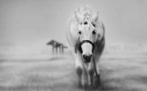 грусть, туман, конь