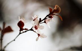 Flores, Macro, Papel pintado, foto