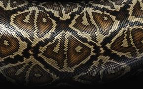 struttura, pelle, Serpente