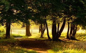 natura, alberi, carta da parati