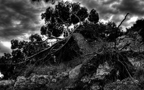 caduto, albero, radice, monocromatico, telaio