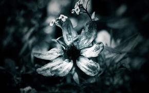 花, 黑与白, 宏