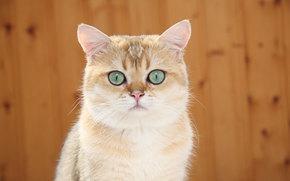 настороже, котяра, кошак, кошка, кот