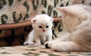 хорошенький, котенок, кошка, кот