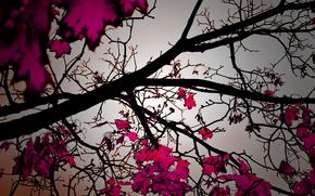 осень, осенние обои, природа, листопад, деревья, листва, фото, романтика, красивые обои для рабочего стола