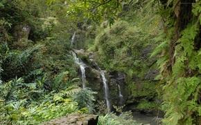 foresta, pendenza, vegetazione, cascata, verdura
