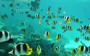 fish, ocean, Caral