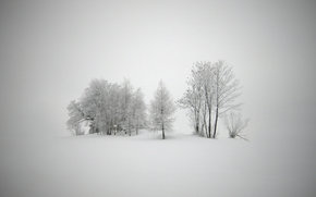 inverno, paesaggi, carta da parati, neve, gelo, freddo, Capodanno, alberi, bufera di neve, tempesta di neve, bufera di neve