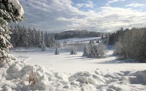 зима, снег, ели, озеро, лед