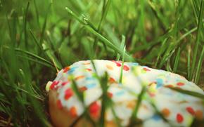 трава, пончик, еда