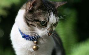 gato, cuello, campana