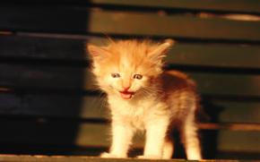 котёнок, рыжий, маукает