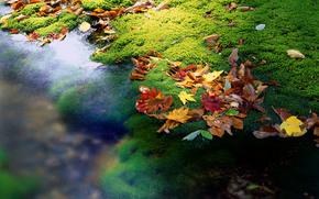 Japan, leaves, creek