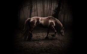 коняшка, темно, страшно