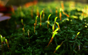 мох, растение.побеги, жизнь, возрождение